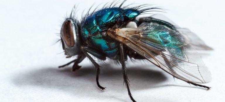 Comment se débarrasser des mouches?